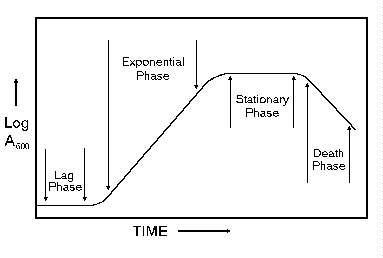 Growth phase graph