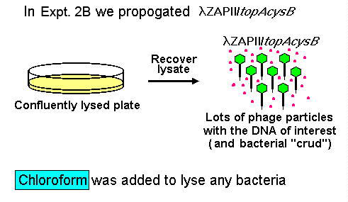 In Expt. 2B we propagated lamda ZAPII/topAcycB