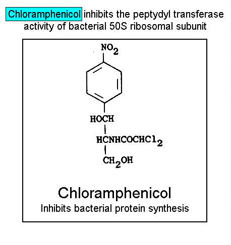 Chloramphenicol inhibits teh peptydyl transferase activity of bacterial 50S ribosomal subunit