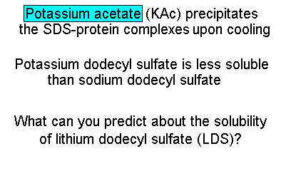 Potasium acetate precipitates the SDS-protein complex