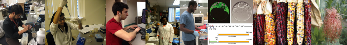 image banner of varous students working in the lab